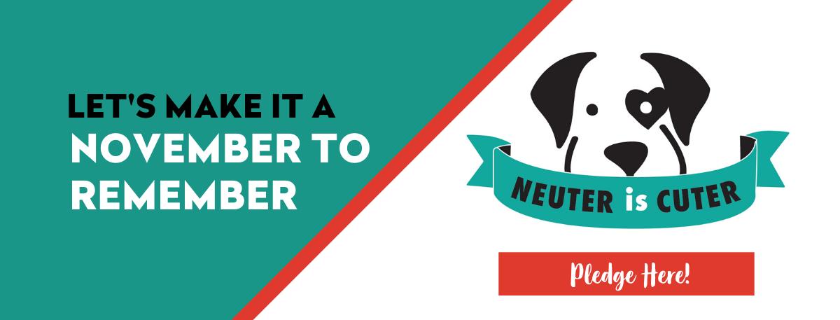 NeuterIsCuter